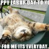 1 happy labor day international workers day?w=546&h=350&q=75 may 1st is may day (international workers' labor day) top memes
