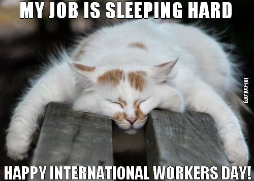1 sleeping tight lolcat international workers day may 1st is may day (international workers' labor day) top memes